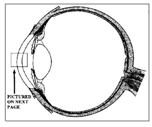 eye with cornea highlighted