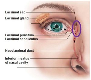 Location of the nasolacrimal sac between the eye and the nose